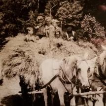 alexanders-horse-cart-opt-1080